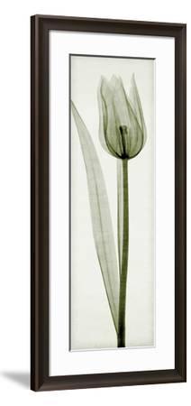 Tulipa I-Steven N^ Meyers-Framed Giclee Print