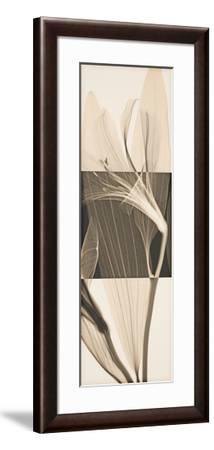 Peruvian Lily II-Steven N^ Meyers-Framed Giclee Print