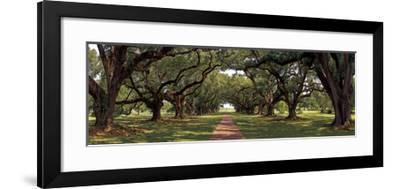 Enchanted Oaks-Mike Jones-Framed Giclee Print