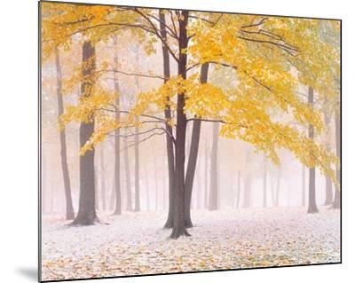 Early Autumn Snow-Jim Becia-Mounted Art Print