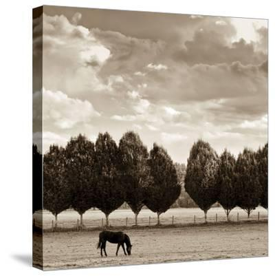 Grazing-Heather Ross-Stretched Canvas Print