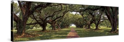 Enchanted Oaks-Mike Jones-Stretched Canvas Print