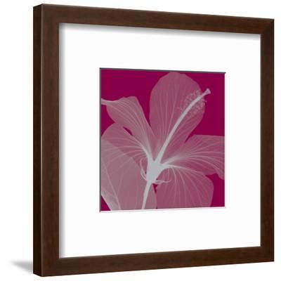 Hibiscus/Silver (small)-Steven N^ Meyers-Framed Art Print