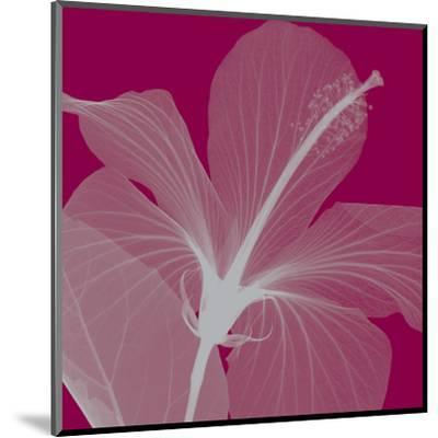 Hibiscus/Silver (small)-Steven N^ Meyers-Mounted Art Print