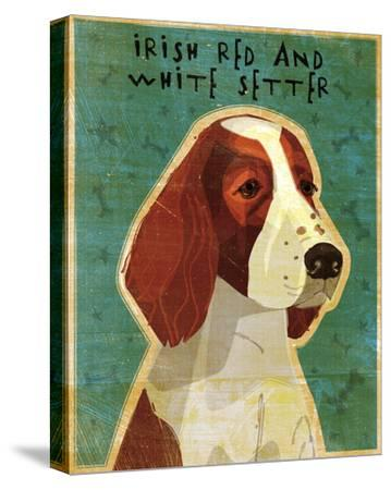 Irish Setter (Red & White)-John Golden-Stretched Canvas Print