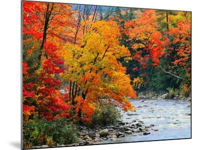 Stream in Autumn Woods--Mounted Art Print