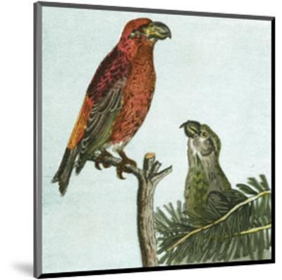 Mini Vintage Birds I--Mounted Art Print