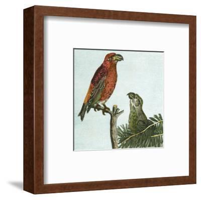 Mini Vintage Birds I--Framed Art Print