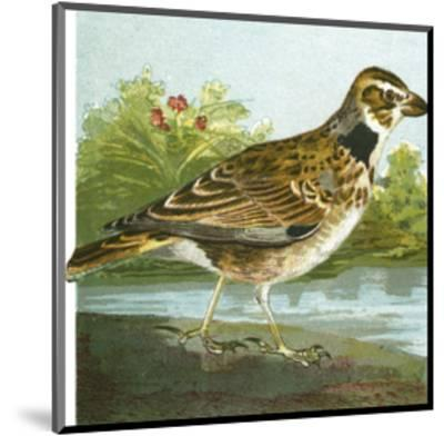 Mini Vintage Birds III--Mounted Art Print