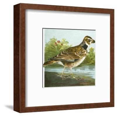 Mini Vintage Birds III--Framed Art Print