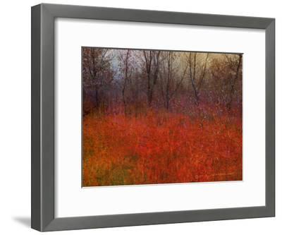 Red Grass I-Chris Vest-Framed Art Print