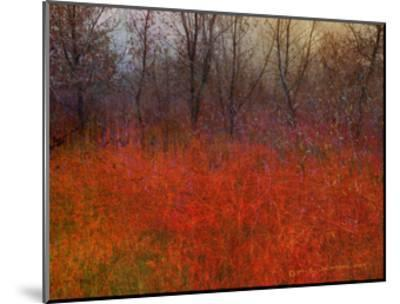 Red Grass I-Chris Vest-Mounted Art Print