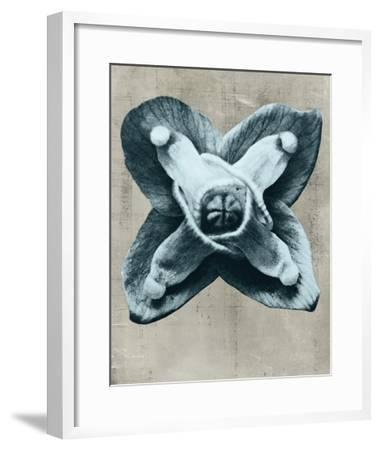 Blossfeldt Redeux IV-Vision Studio-Framed Giclee Print