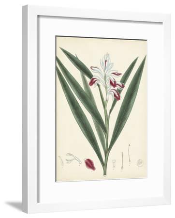 Splendors of Botany XI--Framed Giclee Print
