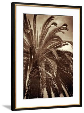 Whispering Palm-Jennifer Broussard-Framed Art Print