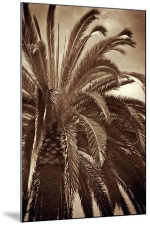 Whispering Palm-Jennifer Broussard-Mounted Art Print