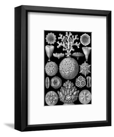 Microscopic Hexacoralla-Ernst Haeckel-Framed Art Print