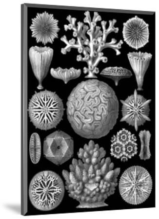 Microscopic Hexacoralla-Ernst Haeckel-Mounted Art Print