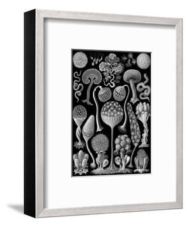 Microscopic Mycetozoa-Ernst Haeckel-Framed Art Print