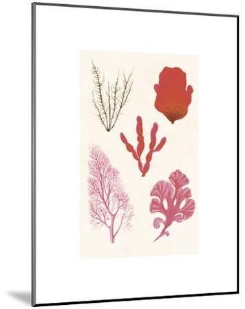 Algae 21--Mounted Art Print