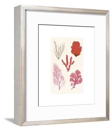Algae 21--Framed Art Print