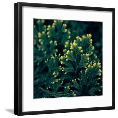 Vega IV-Irene Suchocki-Framed Giclee Print