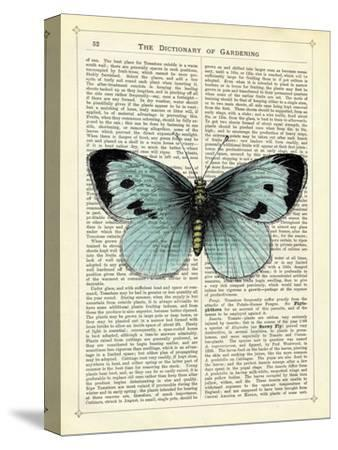 Blue Butterfly-Marion Mcconaghie-Stretched Canvas Print