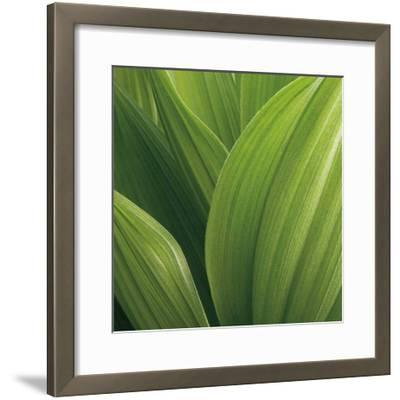 Corn Lily-Jan Bell-Framed Art Print