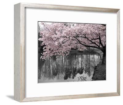 Violet Reflections II--Framed Art Print