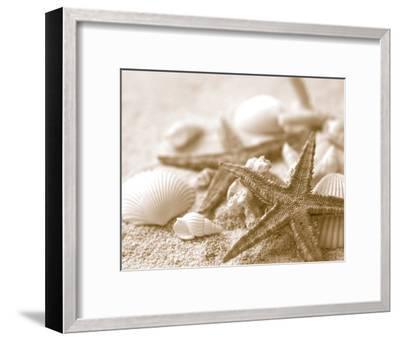 Starfish and Seashells--Framed Art Print
