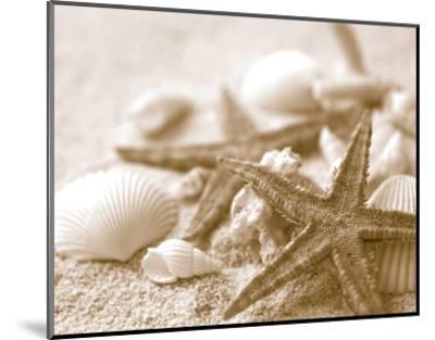 Starfish and Seashells--Mounted Art Print
