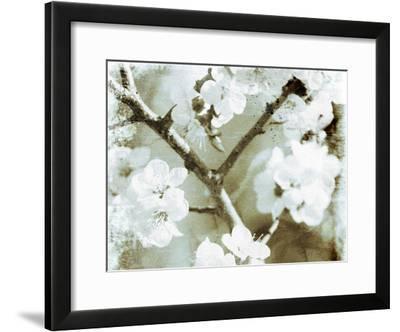 White Blossoms in Sepia II--Framed Art Print