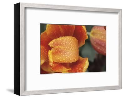 After the Rain 6820-Brian Leighton-Framed Giclee Print