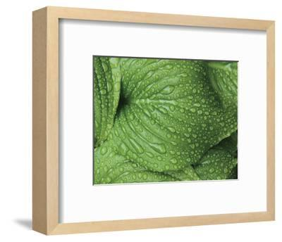 After the Rain 6834-Brian Leighton-Framed Giclee Print