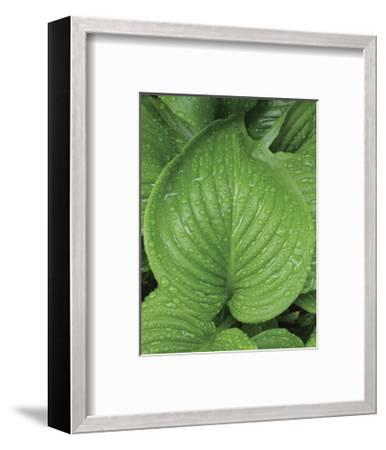 After the Rain 2025-Brian Leighton-Framed Giclee Print