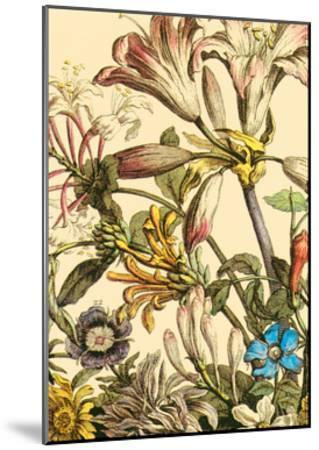 Furber Flowers III - Detail-Robert Furber-Mounted Art Print