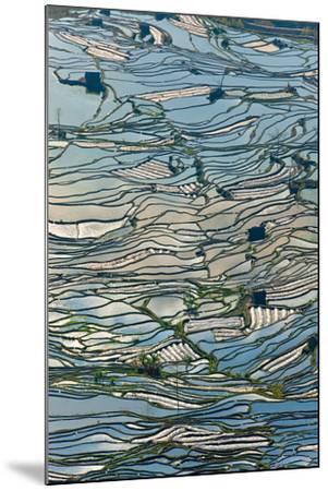 Terrace Reflections II-Peter Adams-Mounted Giclee Print