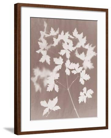 Spray in Grey-Sarah Cheyne-Framed Giclee Print