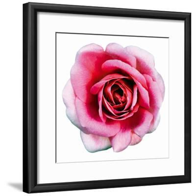 Pink Harmony II-James Guilliam-Framed Giclee Print