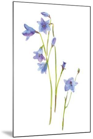 Harebells III-Sandra Jacobs-Mounted Giclee Print