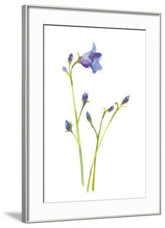 Harebells IV-Sandra Jacobs-Framed Giclee Print