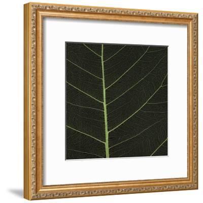 Bo Leaf I-Andrew Levine-Framed Giclee Print
