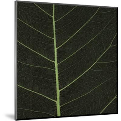 Bo Leaf I-Andrew Levine-Mounted Giclee Print