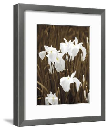 Spring Blossoms I-Boyce Watt-Framed Giclee Print