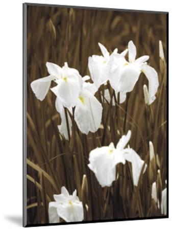 Spring Blossoms I-Boyce Watt-Mounted Giclee Print