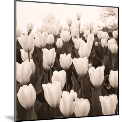 Tulips I--Mounted Art Print