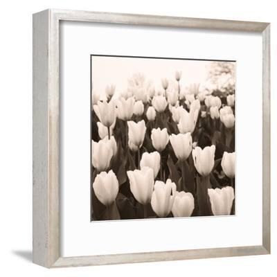 Tulips I--Framed Art Print
