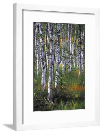 Birch Trees in Field--Framed Art Print