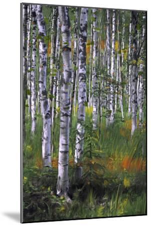 Birch Trees in Field--Mounted Art Print