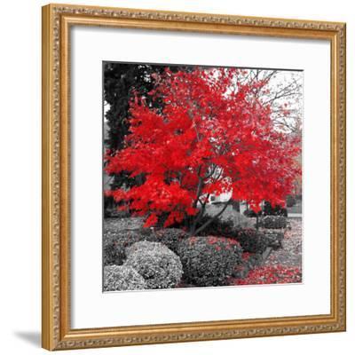 Studies in Red 4--Framed Art Print